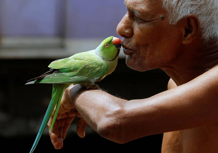 A man kisses his pet parrot along railway tracks at a slum area in Kolkata, Reuters/UNI