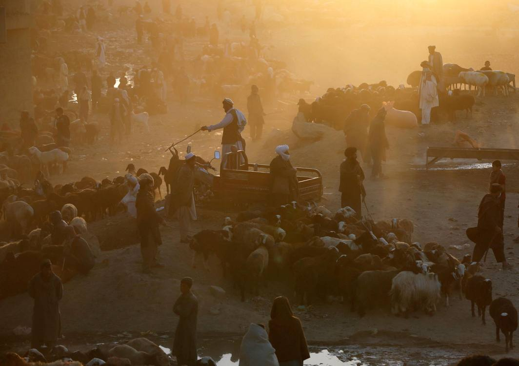 Vendors wait for customers at a livestock market ahead of the Eid al-Adha in Kabul, Afghanistan Reuters/UNI