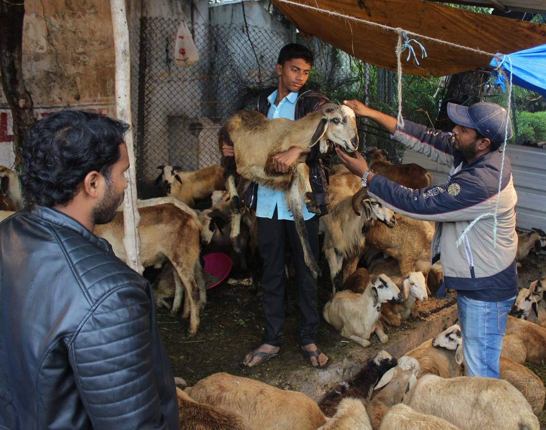 People select goats for sacrifice, at a market ahead of Edi-al-Adha festival in Hyderabad, UNI