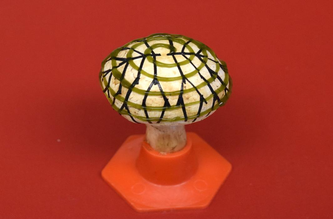 Bionic mushroom that produces electricity created by team of scientists, 2 of Indian origin