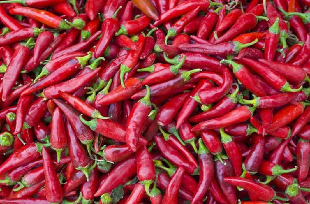 Chilli compound slows lung cancer progression: Study