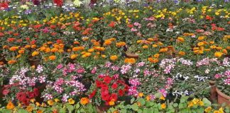 Shadow Spring's magic in Noida