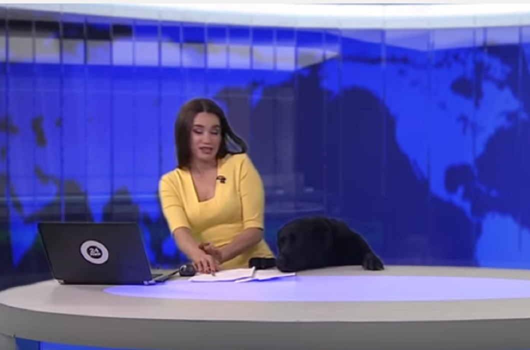 dog on anchor desk