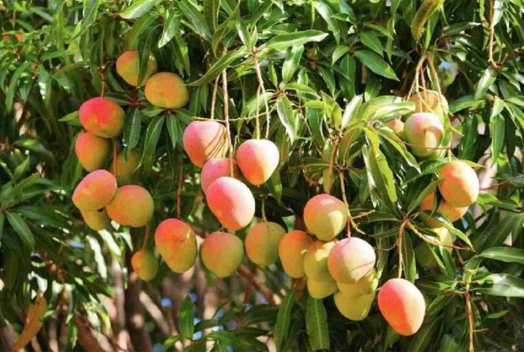 this summer people can take fun with yogi mango