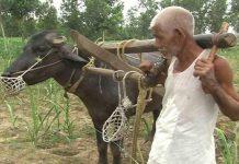 Yogi ji please meditate... The farmer farms holding himself instead of the bull