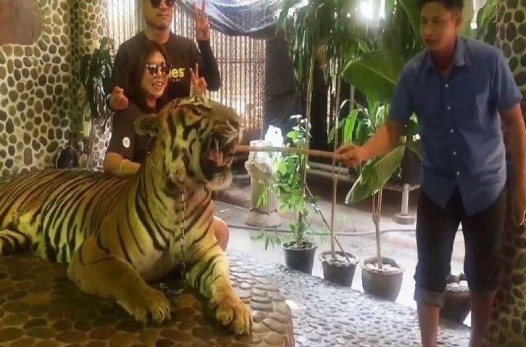 Thai Zoo