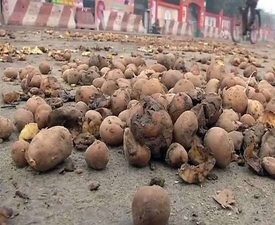 farmers protesting due to fall off price of potatoe by throwing potatoes out of up assembly, raj bhawan and cm house - 1
