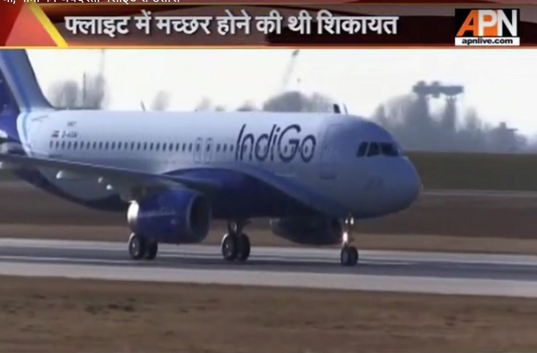 Traveler's mosquito's complaint in Indigo flight