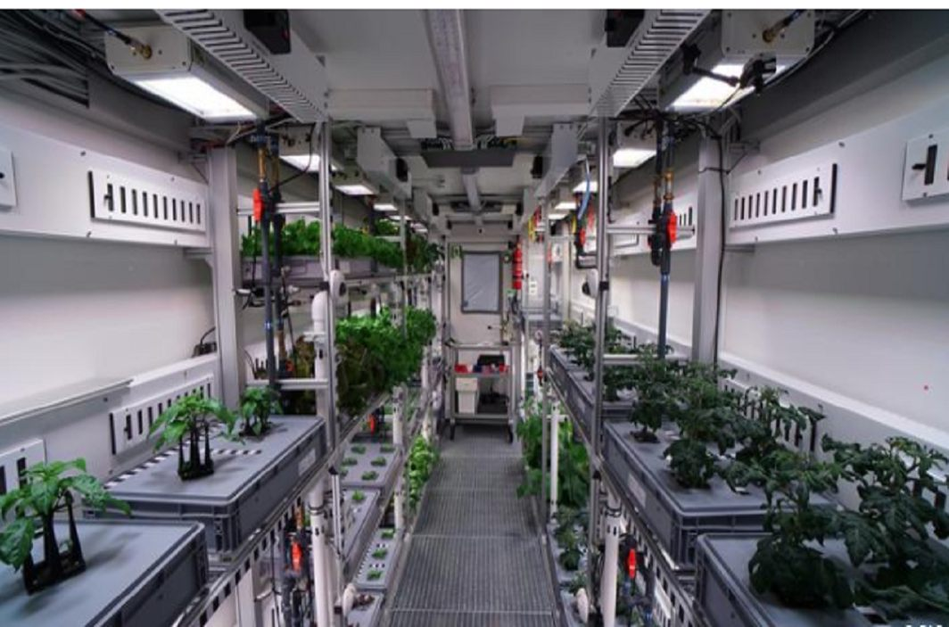 Germany's scientist created history,Vegetables grown in the coldest areas