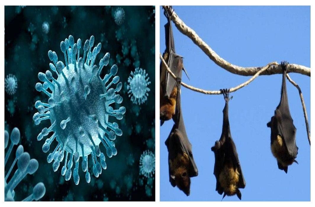 10 deaths from Nipah virus in Kerala, this dangerous disease spreads through bat