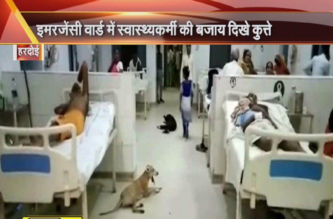 Dogs in the Emergency Ward of Hardoi Hospital