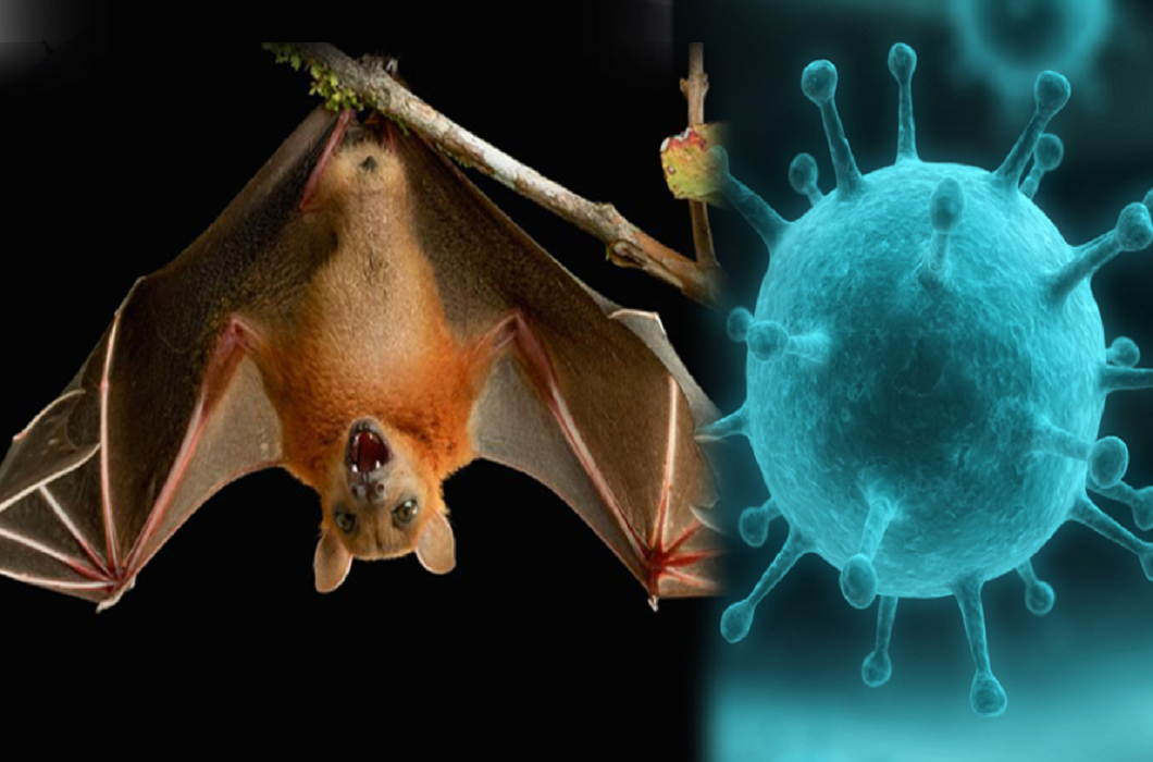 Nipah-virus-Viral-in-Madhya-Pradesh-People-scared-of-the-death-of-bats