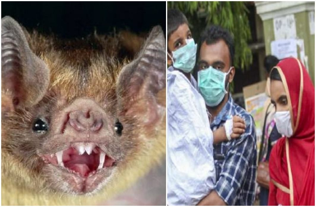 Nipah virus started from Kerala Fast spreading across the country