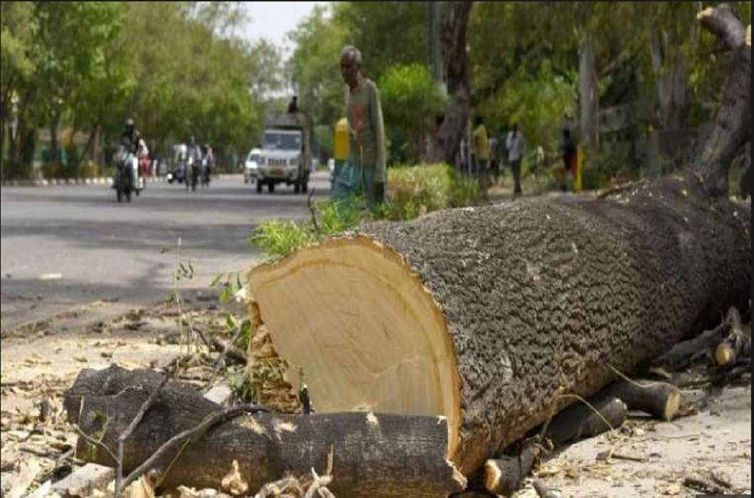 The question of the High Court on the cutting of 16 thousand trees and Can Delhi manage these cutting