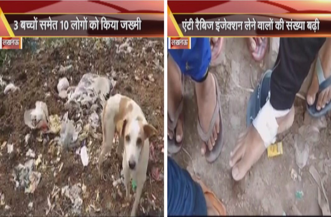 The tragedy of stray dogs in Lucknow,Cut 10 to 3 children including