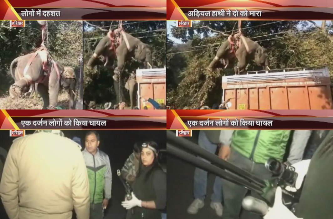 Haridwar: Pradik Elephant killed two, injured a dozen people