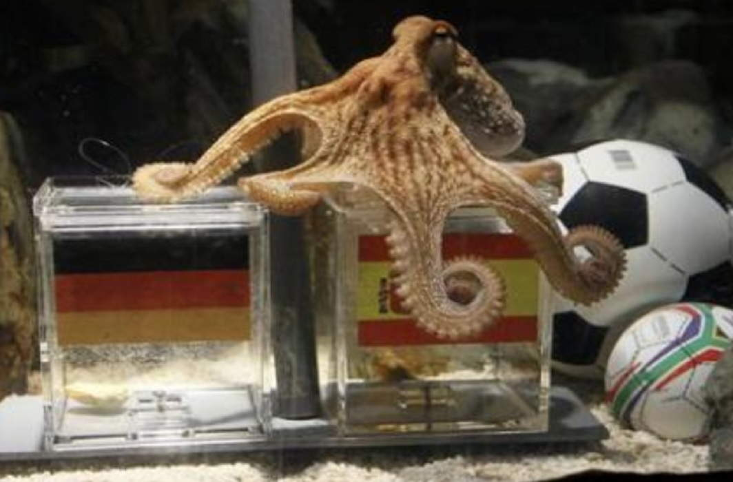 Before the World Cup ended, people cooked and eaten octopus Baba