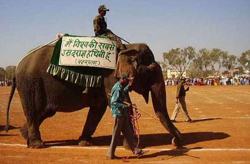Hundred year's elephant's name Attempts to enter Guinness Book of World Records