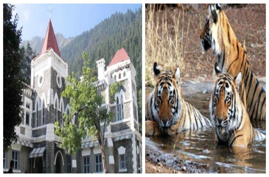 Uttarakhand High Court ordered to investigate the death of tigers in Jim Corbett National Park