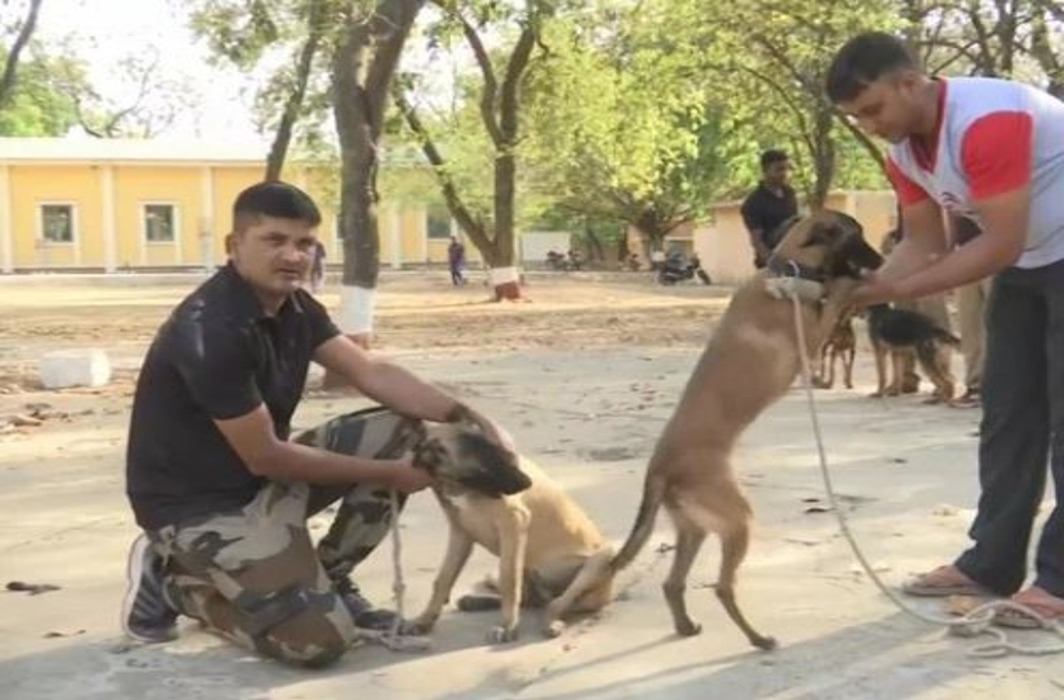46 dogs transfered in mp
