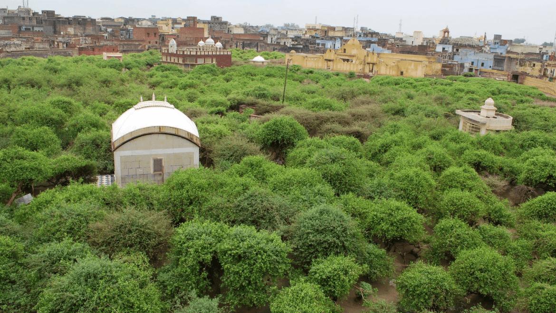 Nidhivan-in-Vrindavan