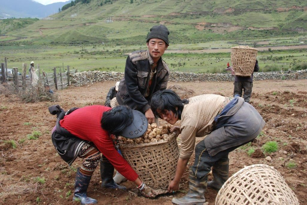 Potato exports from Bhutan to India have also been hit due to demonetization