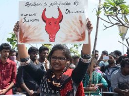 Students from various colleges staging a demonstration at Marina Beach demanding lift a ban on Jallikattu in Chennai. Photo: UNI