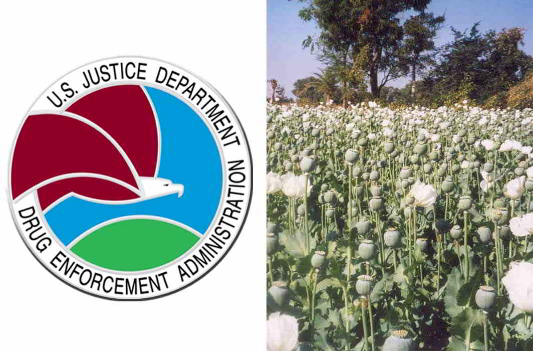 (L-R) seal of DEA; A poppy field (Deeptrivia/Wikipedia)