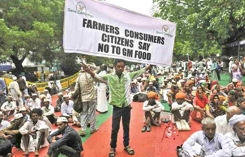 Monsanto has come in for criticism in India for monopolising seed distribution and for disrupting traditional agricultural practices. Photo: Greenpeaceindia