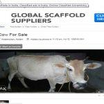 Bech de: Cows on the net
