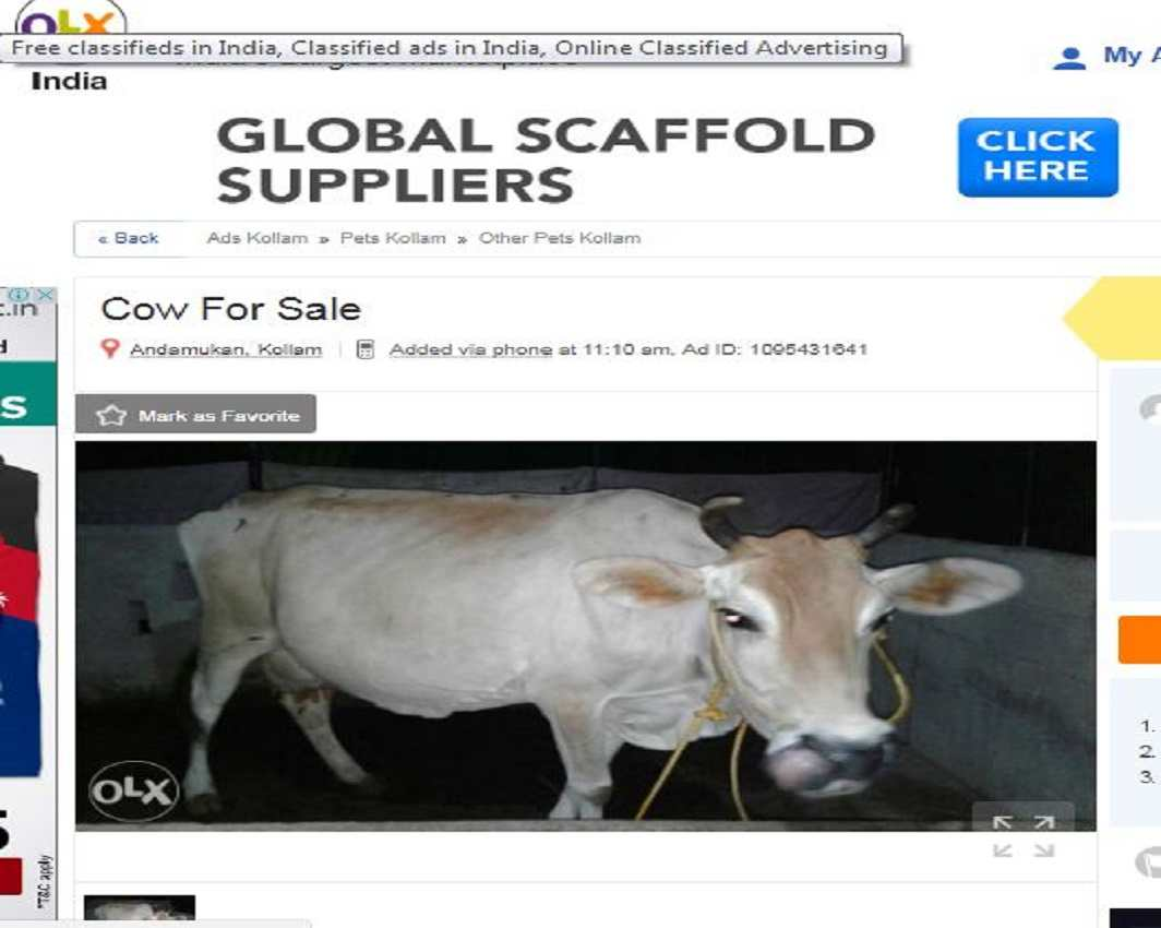 Bech de: Cows on the net - India Legal
