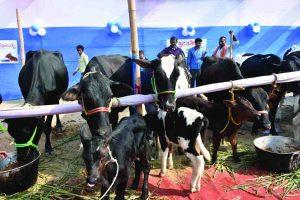 New Cattle Rules. UNI
