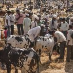 Livestock rule stayed in its entirety by SC