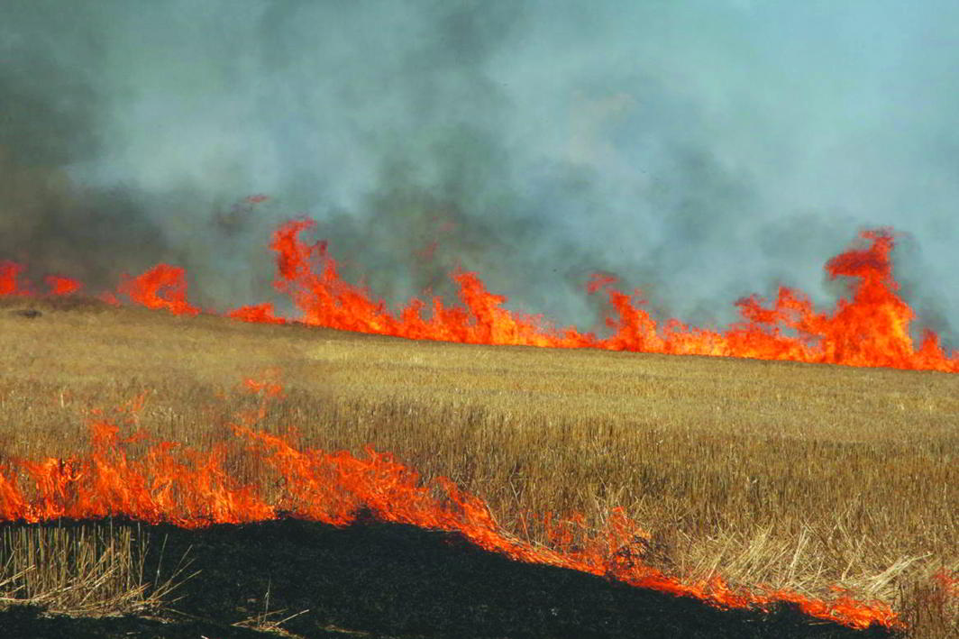 An estimated 15 million tonnes of stubble is burnt in fields to make way for wheat farming