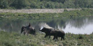 The Yamuna wetlands. Photo: Anil Shakya