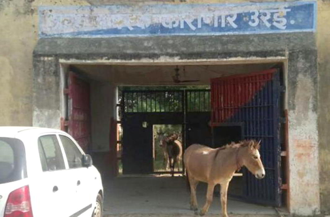 Donkeys' days out ends in peaceful freedom