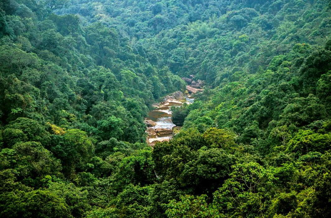 Dense forests in Meghalaya (representative image). Photo Courtesy Wikimedia