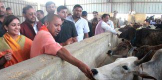 Chief Minister Yogi Adityanath visiting a Kanha Upvan in Lucknow (file picture)/Photo: UNI