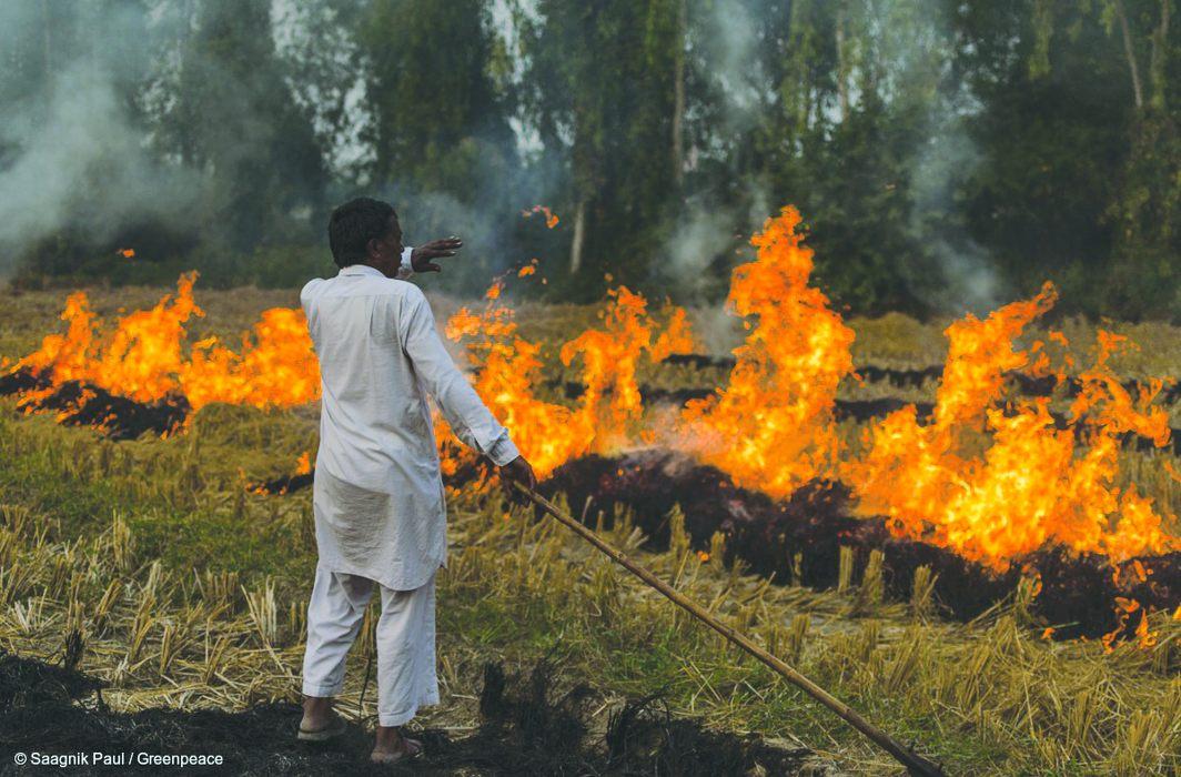 Farmers burn the stubble after harvesting/Photo Courtesy: Greenpeace