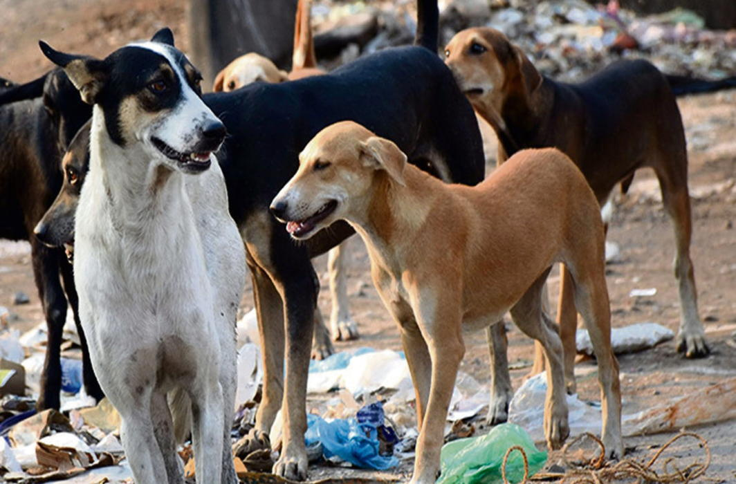 SC wants UP govt's reply: Prove that stray dog bites killed children in Sitapur
