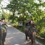 National Parks: Batting for Wildlife