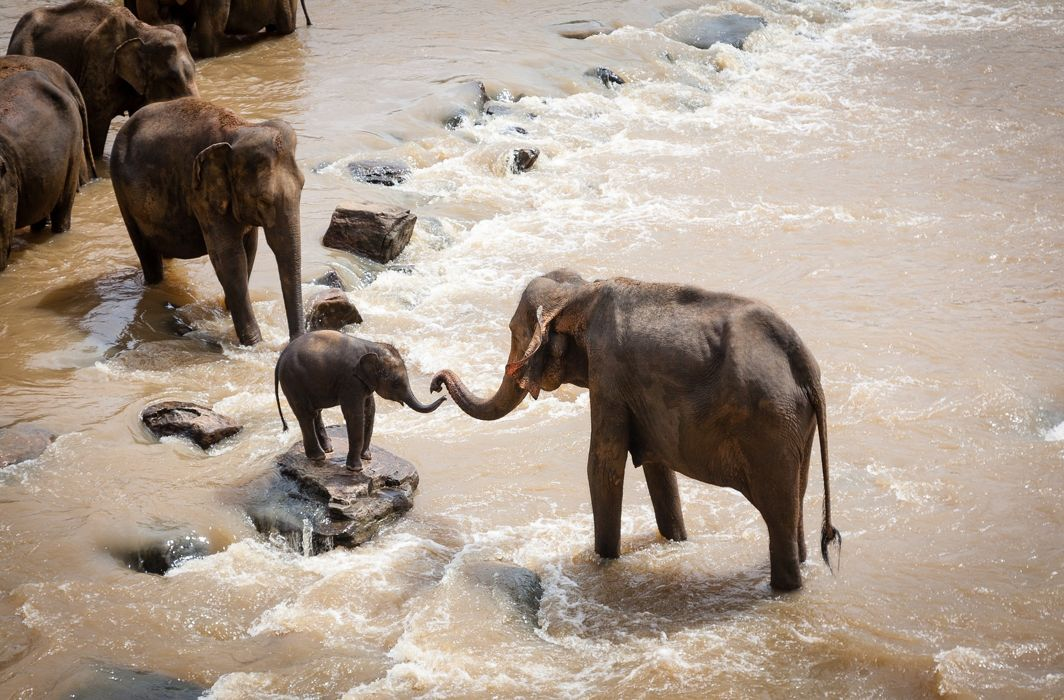 Supreme Court tells states to desist from the use of fireballs, spikes for driving elephants