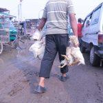 Delhi HC bans slaughtering of animals at Ghazipur Murga Mandi