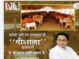 The Kamal Nath-led Congress government has promised to build 23,000 cowsheds/Photo: @INCMP/twitter