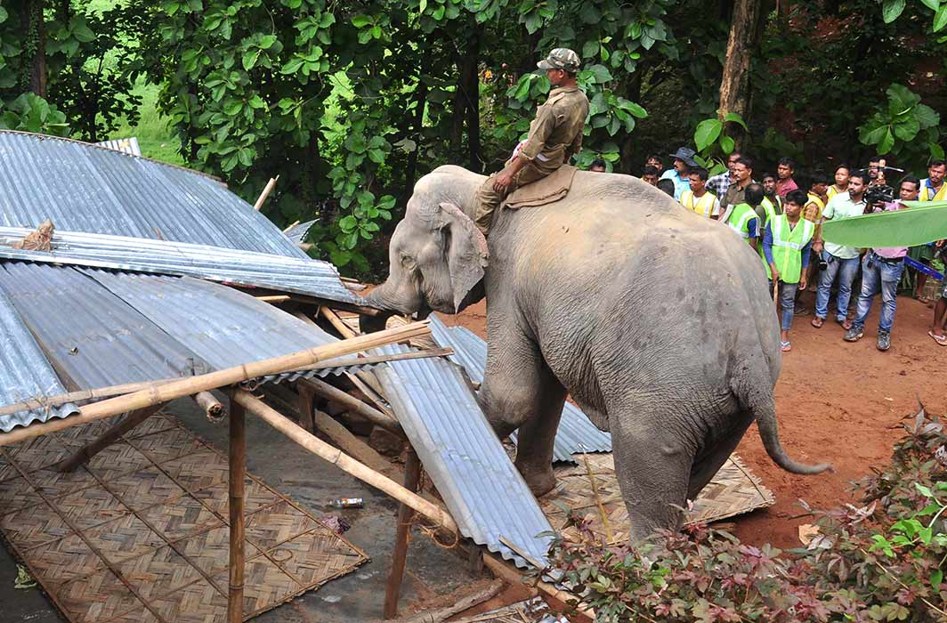 A forest official on an elephant removes illegal dwellers from Kakan Nagar forest in Guwahati/Photo: UNI