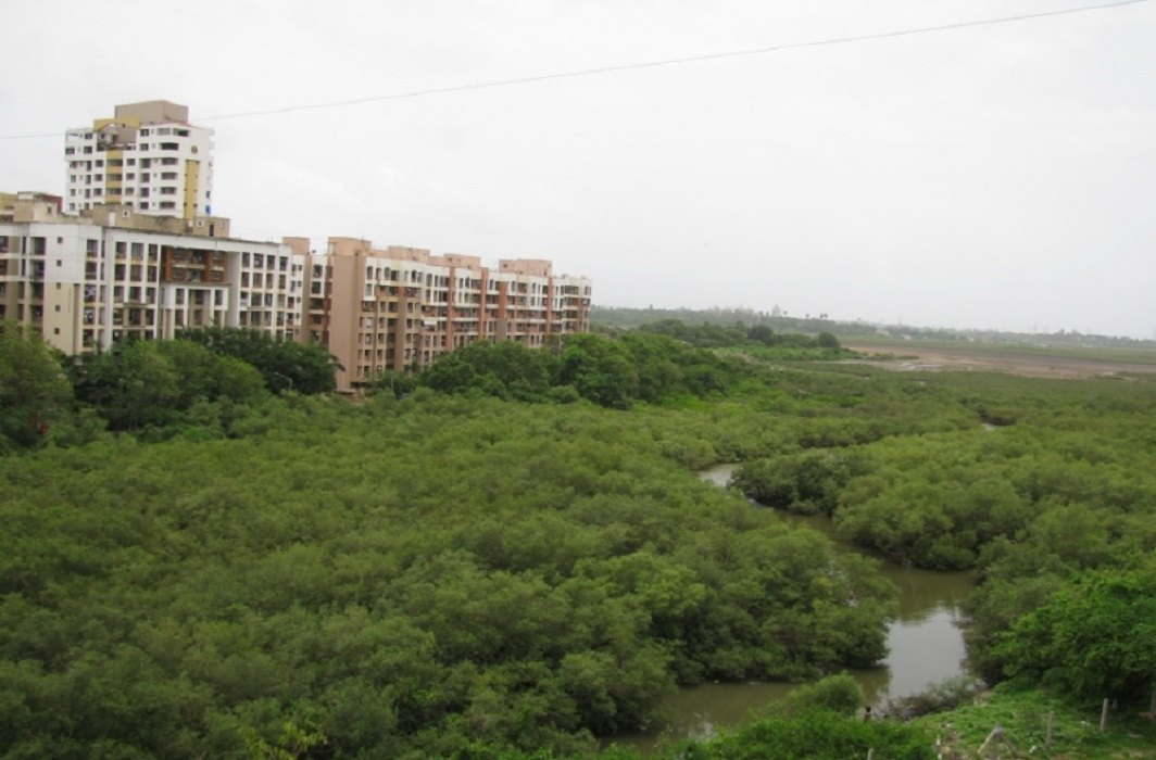 Mangrove forest at Charkop in Mumbai/Photo: commons.wikimedia.org