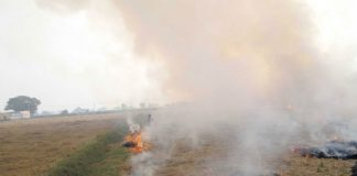 A paddy field on fire along the Sirsa-Delhi highway/Photo: UNI
