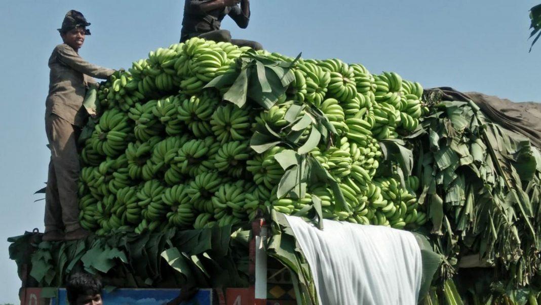 Farmers at farm Mandi UNI (5)
