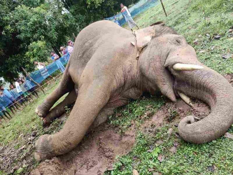 elephant-killed