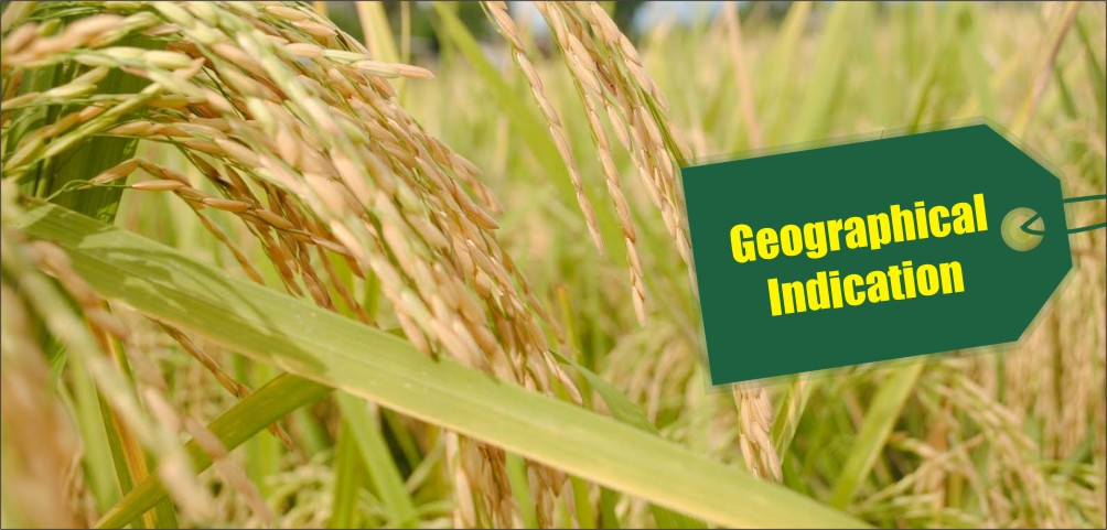 Geographical Indication for Basmati rice